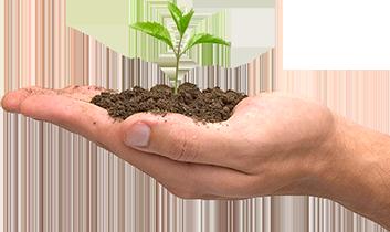 Mão Plantando